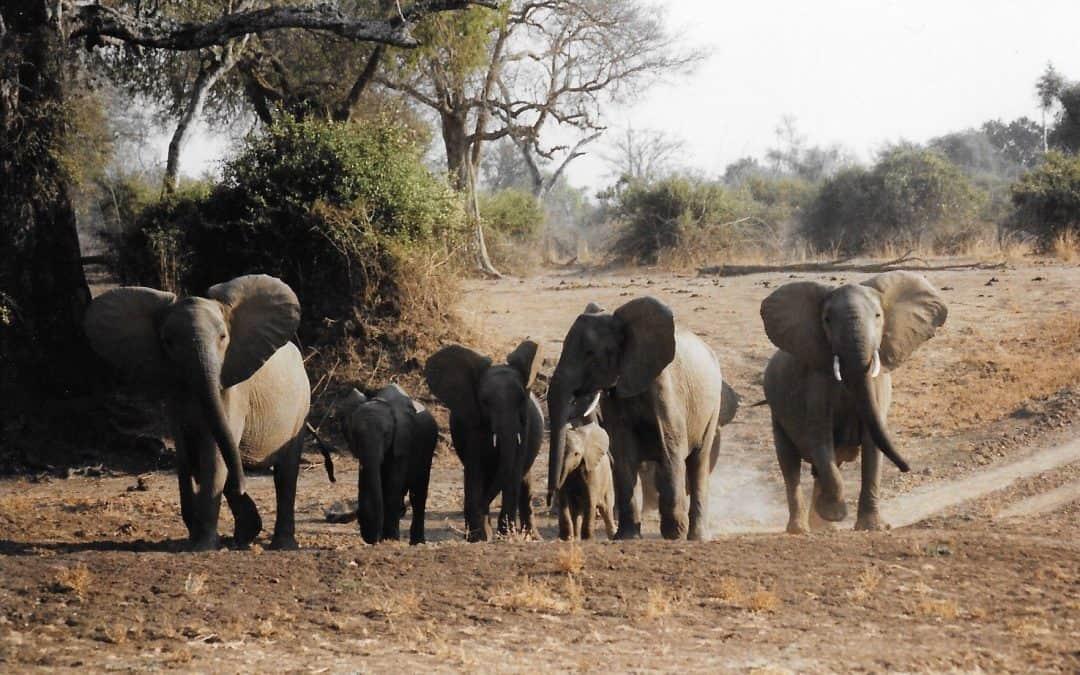 How elephants, hippos and crocs shaped my career
