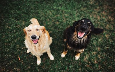 Starting a website that would connect animal therapists in the UK